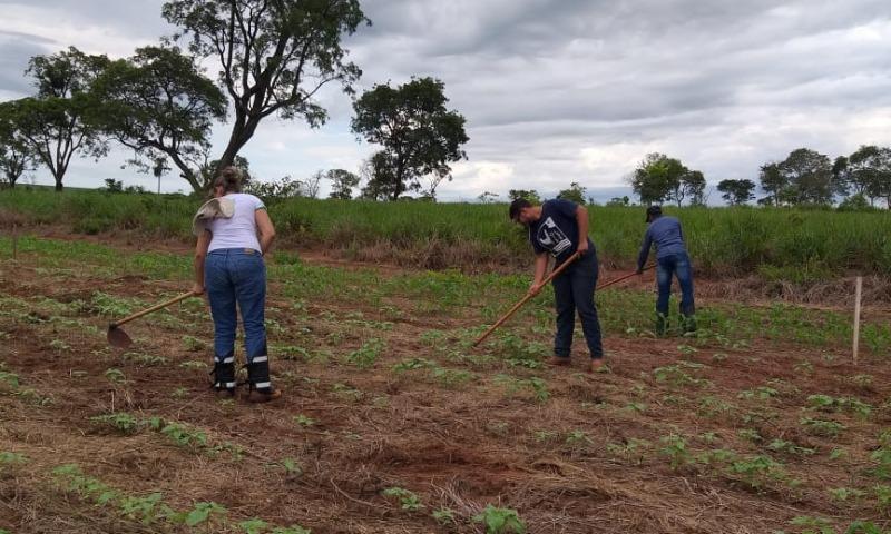 Projetos de Ciências Agrárias foram desenvolvidos na área experimental do campus - Foto: Campus Nova Andradina